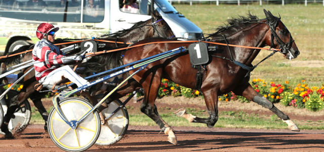 French trotter Gatsby to prove a great purchase
