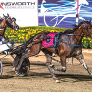 Ready to match dam as Group One winner