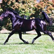 Sad passing of former top racehorse and sire