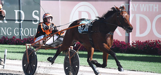 Mike Ko'cass with the good oil for Menangle Tuesday