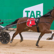 Young trotter facing acid test