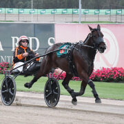 Step up in class for promising trotter