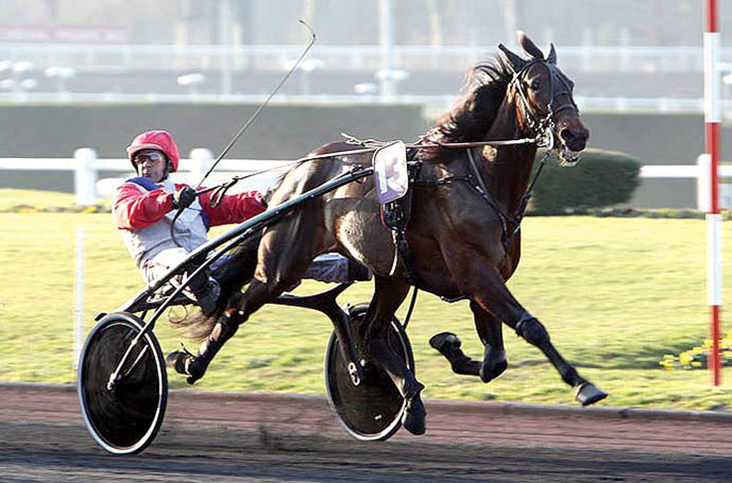Australian filly the only one in the world