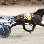 Aussie-bred pacer shines at Tioga Downs