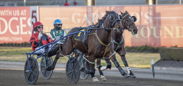 Consistent pacer drawn to register overdue win