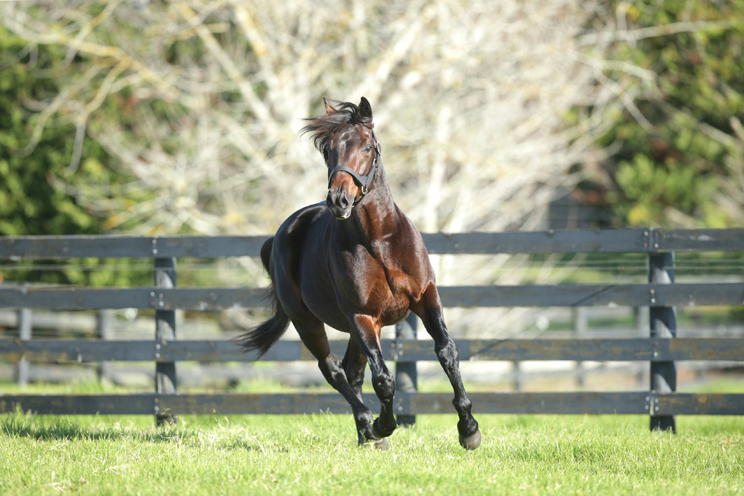 Multiple Group One winner to stand at stud in Australia