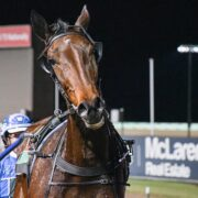 Rising star aimed at happy homecoming