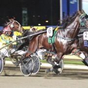 Can unbeaten colt reach heights of famous father?