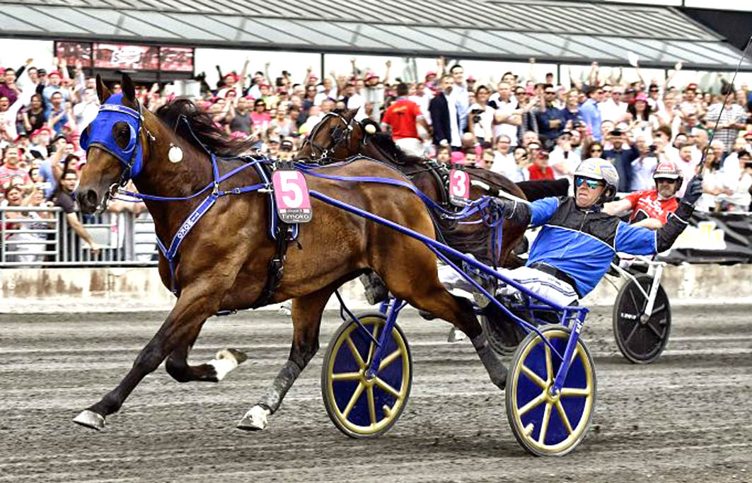 Stellar news for trotting breeders