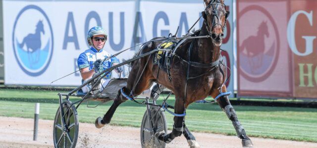 Welcome back patrons . . . here's five Menangle specials