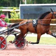 French import to make Aussie debut in Derby heats
