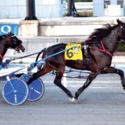 Kiwi-bred pacer too quick in USA