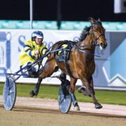 Group One winning trotter heading interstate