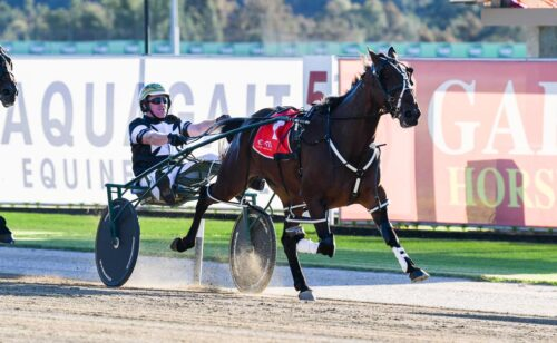 Specials galore at Menangle and Albion Park