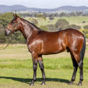Most exciting yearling sales NSW will ever see