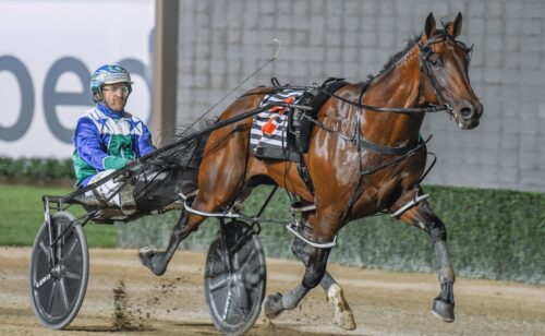 The crowds are back so what's next for Club Menangle?