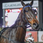 All the winners for Menangle on Saturday night