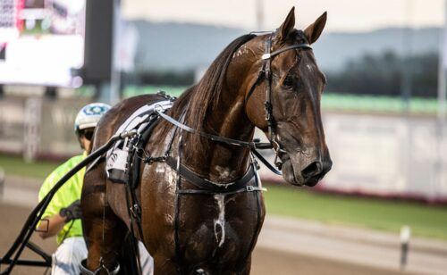 'Mr Inter Dominion's' Miracle Mile memories