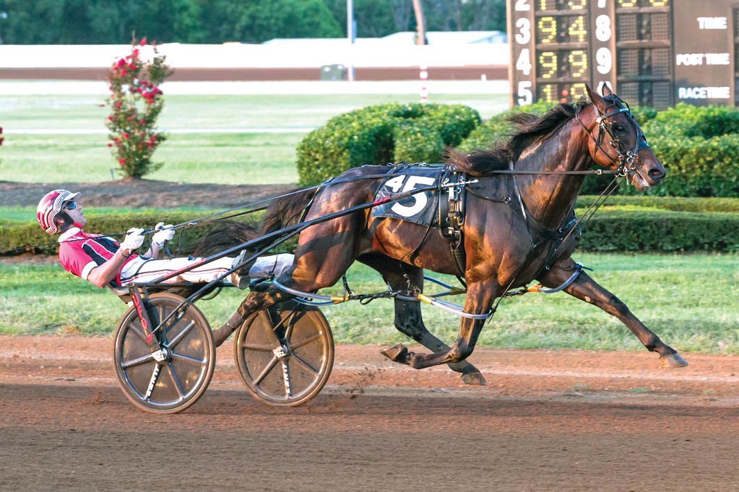 Horse of a lifetime to stand at Alabar