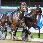 Classy filly heads into heat on winning note
