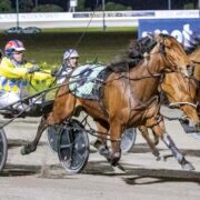 Consistent mare aimed at Triple Crown