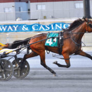 Consecutive wins for freshman trotter