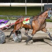 Talented mare adds to perfect track record